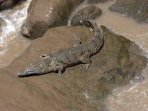 Ο κροκόδειλος του Νείλου, niloticus Crocodylus, βρίσκεται στις πτώσεις Awash, Αιθιοπία στοκ εικόνα