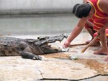Ο κροκόδειλος παρουσιάζει στο αγρόκτημα κροκοδείλων στοκ φωτογραφίες