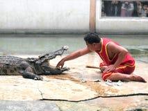Ο κροκόδειλος παρουσιάζει στο αγρόκτημα κροκοδείλων στοκ εικόνα με δικαίωμα ελεύθερης χρήσης