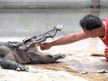 Ο κροκόδειλος παρουσιάζει στο αγρόκτημα κροκοδείλων στοκ φωτογραφία