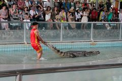 Ο κροκόδειλος παρουσιάζει στοκ εικόνα