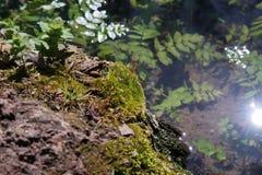 Ο κρυμμένος βάτραχος Στοκ φωτογραφία με δικαίωμα ελεύθερης χρήσης