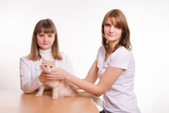 Ο κτηνίατρος επιθεωρεί μια κόκκινη γάτα Στοκ φωτογραφίες με δικαίωμα ελεύθερης χρήσης