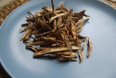 Ο κυνόδοντας feng ή οι ρίζες divaricata saposhnikovia siler κλείνει επάνω το βλέμμα στο ουδέτερο υπόβαθρο Στοκ Φωτογραφίες