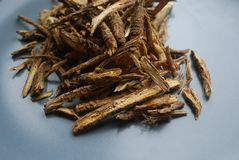 Ο κυνόδοντας feng ή οι ρίζες divaricata saposhnikovia siler κλείνει επάνω το βλέμμα στο ουδέτερο υπόβαθρο Στοκ εικόνα με δικαίωμα ελεύθερης χρήσης