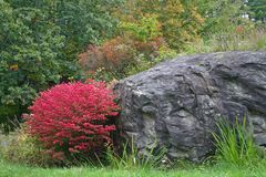 Ο κόκκινοι Μπους & βράχος Στοκ φωτογραφία με δικαίωμα ελεύθερης χρήσης