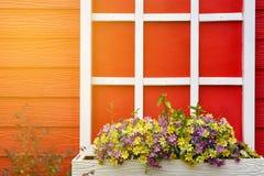 Ο κόκκινος ξύλινος τοίχος με το άσπρο παράθυρο που διακοσμείται με το γεράνι ανθίζει, φως φλογών Στοκ εικόνες με δικαίωμα ελεύθερης χρήσης
