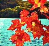 Ο κόκκινος σφένδαμνος βγάζει φύλλα την αφηρημένη λίμνη Στοκ εικόνες με δικαίωμα ελεύθερης χρήσης