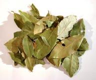 ο κόλπος 2 βγάζει φύλλα στοκ εικόνα