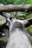 Ο κόμβος δέντρων στοκ φωτογραφία με δικαίωμα ελεύθερης χρήσης