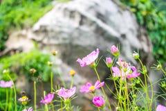 ο κόσμος ανθίζει το ροζ Στοκ Φωτογραφία