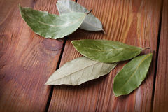 Ο κόλπος βγάζει φύλλα Στοκ Εικόνες