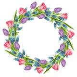 Ο κύκλος διαμόρφωσε το στεφάνι φιαγμένο από λουλούδια: ρόδινης και πορφυρής τουλίπα muscari, διανυσματική απεικόνιση