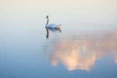 Ο Κύκνος ανάβει καταρχάς σε μια λίμνη Στοκ φωτογραφία με δικαίωμα ελεύθερης χρήσης
