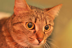 Ο κύριος Cat Στοκ φωτογραφία με δικαίωμα ελεύθερης χρήσης