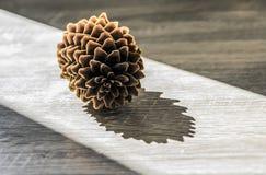 Ο κώνος πεύκων βρίσκεται σε έναν ξύλινο πίνακα σε μια ακτίνα του φωτός του ήλιου Στοκ Φωτογραφίες