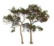 Ο κλάδος δέντρων Στοκ Φωτογραφία