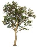 Ο κλάδος δέντρων Στοκ φωτογραφία με δικαίωμα ελεύθερης χρήσης