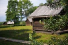 Ο κλάδος ενός πεύκου και του παλαιού σπιτιού ρωσικός-ύφους Στοκ Φωτογραφίες