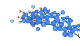 Ο κλάδος μπλε forget-me-not ανθίζει απομονωμένος - διανυσματική απεικόνιση Στοκ Εικόνες