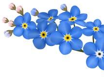 Ο κλάδος μπλε forget-me-not ανθίζει απομονωμένος - διανυσματική απεικόνιση Στοκ φωτογραφία με δικαίωμα ελεύθερης χρήσης