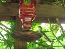 Ο κ. Birdy στοκ φωτογραφίες
