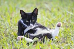 Ο κ. Tuxedo Cat Relaxing Sitting στο ναυπηγείο Στοκ Εικόνα