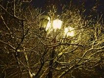 Ο λαμπτήρας οδών φωτίζει το δέντρο που καλύπτεται με το χιόνι Στοκ Εικόνες