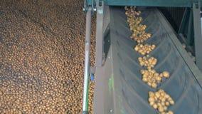 Ο λειτουργώντας μεταφορέας κινεί τις πατάτες, κλείνει επάνω απόθεμα βίντεο