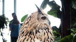 Ο λευκός Μαύρος κουκουβαγιών πουλιών είναι μεγάλο μάτι στοκ φωτογραφία με δικαίωμα ελεύθερης χρήσης