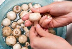 Ο μάγειρας πλένει τα μανιτάρια στο νερό Στοκ Εικόνες