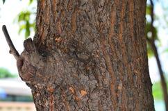 Ο μίσχος του δέντρου Στοκ φωτογραφίες με δικαίωμα ελεύθερης χρήσης