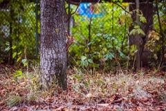 Ο μαγικός σκίουρος στοκ εικόνες με δικαίωμα ελεύθερης χρήσης