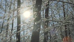 Ο μαγικός χειμώνας μαγισσών ατμόσφαιρας Χριστουγέννων κοιτάζει απόθεμα βίντεο