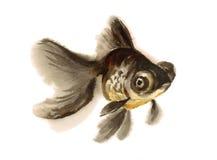 Ο Μαύρος δένει το χέρι απεικόνισης Goldfish Watercolor που σύρεται Στοκ Εικόνες