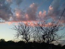 Ο Μαύρος δέντρων στοκ φωτογραφίες με δικαίωμα ελεύθερης χρήσης