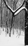 ο Μαύρος ακριβώς λευκός Στοκ εικόνες με δικαίωμα ελεύθερης χρήσης