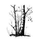 ο Μαύρος ανασκόπησης απομόνωσε το λευκό δέντρων σκιαγραφιών Στοκ φωτογραφία με δικαίωμα ελεύθερης χρήσης