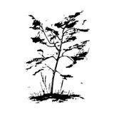 ο Μαύρος ανασκόπησης απομόνωσε το λευκό δέντρων σκιαγραφιών Στοκ Φωτογραφία