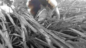 Ο Μαύρος και ένας παφλασμός των μανιταριών χρώματος Στοκ εικόνα με δικαίωμα ελεύθερης χρήσης