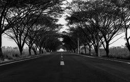 Ο Μαύρος και μοναξιά δέντρων οδών Στοκ Εικόνα