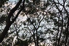 Ο Μαύρος και μορφή του δέντρου Στοκ Φωτογραφίες