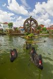 Ο μαύρος κύκνος κολυμπά με τα ψάρια koi στον κήπο με το watermill Στοκ φωτογραφίες με δικαίωμα ελεύθερης χρήσης