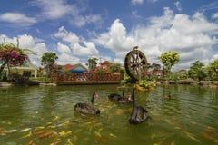 Ο μαύρος κύκνος κολυμπά με τα ψάρια koi με το watermill ως βλαστός υποβάθρου στοκ εικόνα