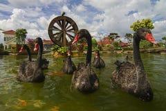 Ο μαύρος κύκνος κολυμπά με τα ψάρια koi με το watermill ως βλαστός υποβάθρου στοκ φωτογραφία με δικαίωμα ελεύθερης χρήσης