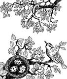 Ο Μαύρος πουλιών και σαλιγκαριών Στοκ Εικόνες