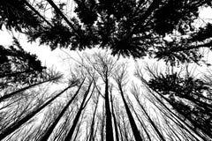 ο Μαύρος σκιαγραφεί τα δέντρα Στοκ Εικόνες