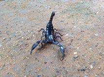 Ο μαύρος σκορπιός στο χώμα Στοκ φωτογραφίες με δικαίωμα ελεύθερης χρήσης