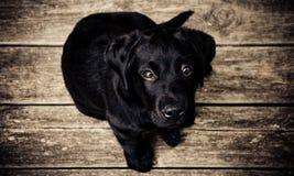 Ο Μαύρος σκυλιών κάθεται στον τρύγο πατωμάτων ξύλων Στοκ Φωτογραφία