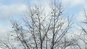 Ο Μαύρος των πουλιών που πετούν από ένα δέντρο φιλμ μικρού μήκους